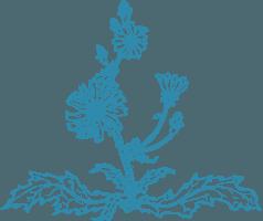Čakanka (kreslené logo)
